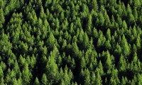 Primato per il Piemonte: per le foreste è la regione prima in Italia